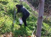 сбор свежих овощей в деревне Патсос - свежие органические овощи для наших рецептов критской кухни