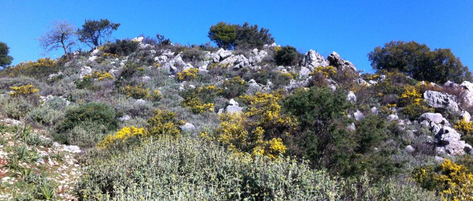 die erstaunliche Natur von Kreta - Rethymnon (Patsos, Amari)